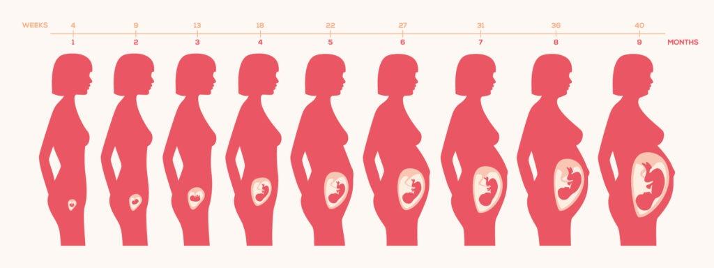 Evoluzione della gravidanza